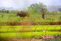 广西融安谷雨时节田园美
